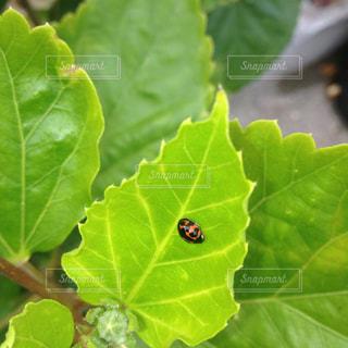 近くの緑の植物をの写真・画像素材[1371530]