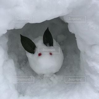 雪の山の写真・画像素材[1597488]