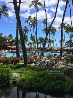 ハワイのプールの写真・画像素材[1262902]