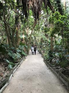 ジャングル道の写真・画像素材[1262999]