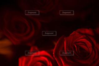 赤と黒の写真・画像素材[1281287]