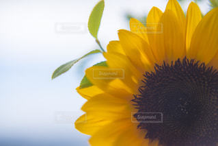 夏の花の写真・画像素材[1295784]