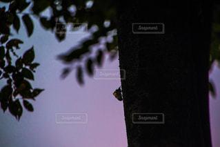 夏の夕暮れの写真・画像素材[1328164]