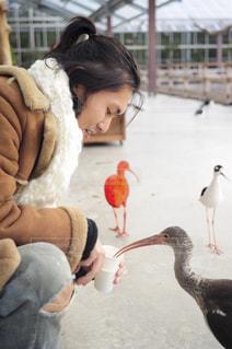 鳥好き男子の写真・画像素材[1388736]