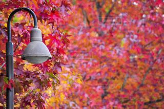 秋の写真・画像素材[1398895]