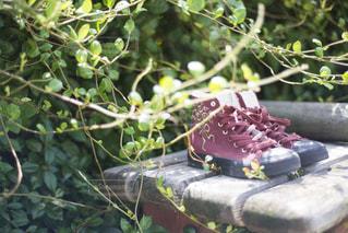 秋色スニーカーの写真・画像素材[1447596]