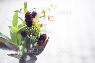 秋の花の写真・画像素材[1449016]