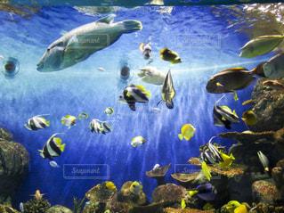 水族館の魚たちの写真・画像素材[1461599]