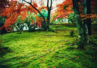 京都の秋の写真・画像素材[1499813]