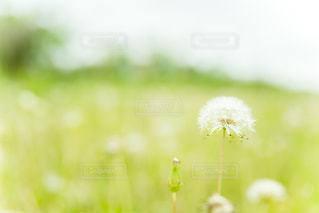 野原の写真・画像素材[1513679]