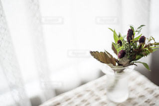 秋の花の写真・画像素材[1519296]