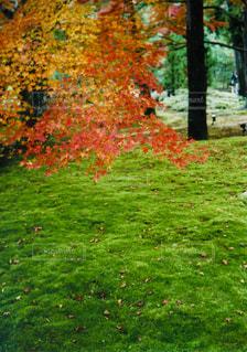 彩りの秋の写真・画像素材[1529611]