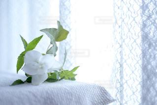 クルクマの花の写真・画像素材[1533013]