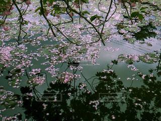 鏡池の写真・画像素材[1537913]