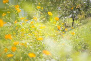 秋散歩の写真・画像素材[1570213]