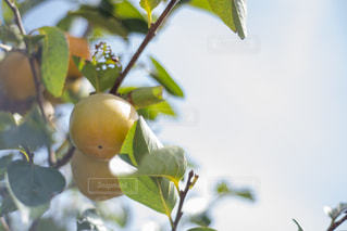 秋散歩の写真・画像素材[1570232]