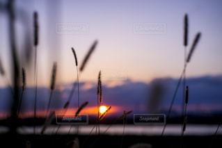 秋の夕暮れの写真・画像素材[1574224]