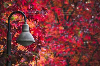 秋が燃えているの写真・画像素材[1598310]