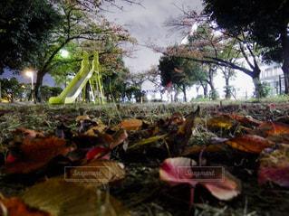 夜の公園の写真・画像素材[1615682]