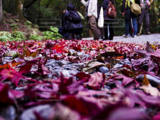 秋の奈良の写真・画像素材[1634084]