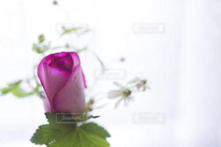 小さな花束の写真・画像素材[1682504]
