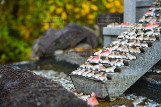 祈り亀の写真・画像素材[1725399]