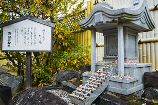 祈り亀の写真・画像素材[1725400]