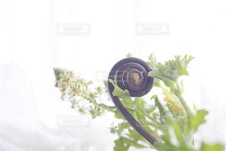 春に咲くの写真・画像素材[1749702]