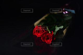2輪の薔薇の写真・画像素材[1819613]
