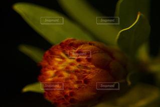 花の写真・画像素材[1819614]