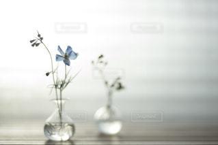 お花と過ごす毎日の写真・画像素材[1821567]