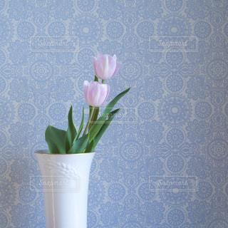 花のある生活の写真・画像素材[1870390]