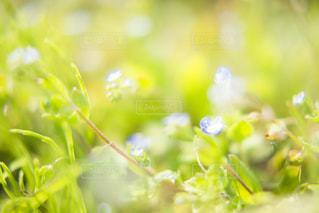 小さくて可愛い春の花の写真・画像素材[2059918]