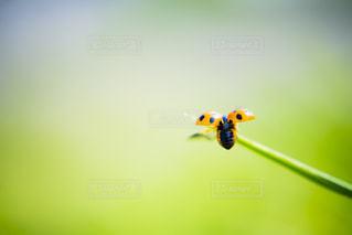 てんとう虫の写真・画像素材[2059922]