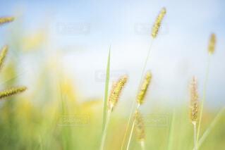秋景色の写真・画像素材[3696310]