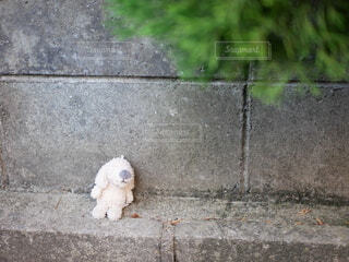 誰かの落とし物のぬいぐるみの写真・画像素材[4773403]