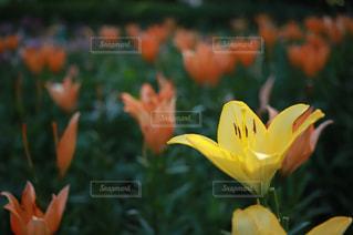 近くの花のアップの写真・画像素材[1263599]