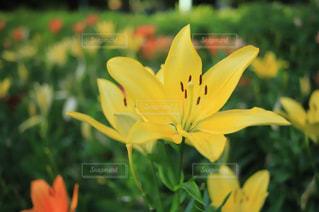 近くの花のアップの写真・画像素材[1263600]