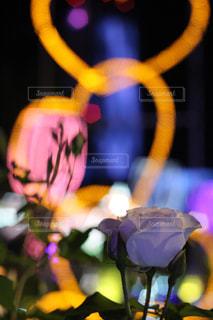 イルミネーションと薔薇の写真・画像素材[1274621]