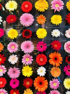 カラフルなお花のディスプレイ - No.1265921