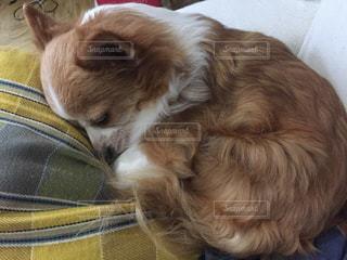犬とスーツケースの上で眠っている猫の写真・画像素材[1266046]