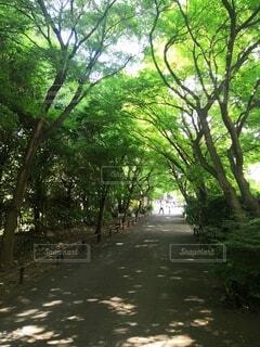 高円寺の高圓寺の写真・画像素材[4449233]