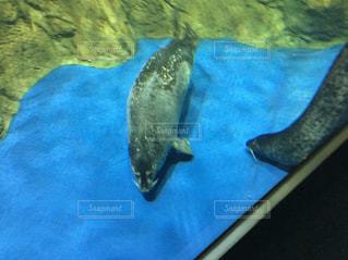 水面下を泳ぐアザラシ - No.1265923