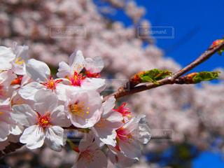 近くの花のアップ - No.1265982