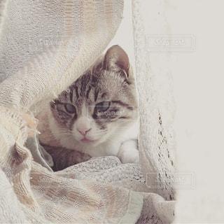 毛布の上に座っている猫の写真・画像素材[1266529]