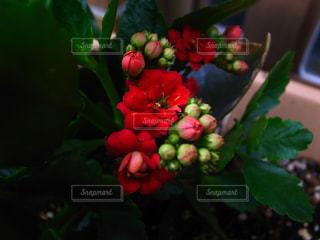近くに植物の花のアップの写真・画像素材[1266882]
