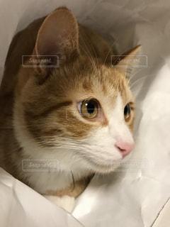 猫のアップの写真・画像素材[1267222]