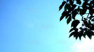 ClearSkyの写真・画像素材[1267647]