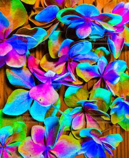 色とりどりの花のグループの写真・画像素材[1330234]
