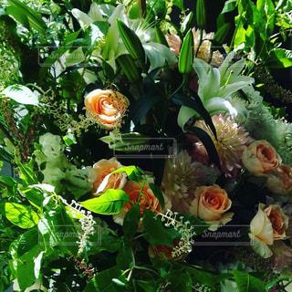 近くの花のアップの写真・画像素材[1330235]
